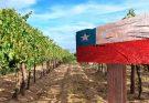 Brasil é o maior mercado consumidor de vinhos chilenos