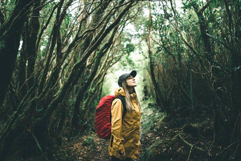 banhos de bosque