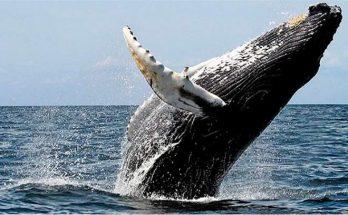 Txai Resort Itacaré é cenário para avistar Baleias Jubartes