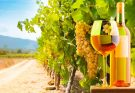 rota do vinho mexicano em Visit México